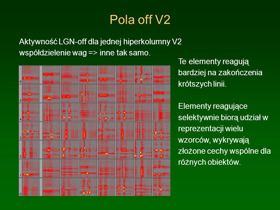 Pola off V2 Aktywność LGN-off dla jednej hiperkolumny V2 współdzielenie wag => inne tak samo.