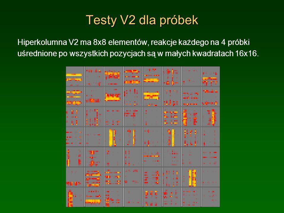 Testy V2 dla próbekHiperkolumna V2 ma 8x8 elementów, reakcje każdego na 4 próbki uśrednione po wszystkich pozycjach są w małych kwadratach 16x16.