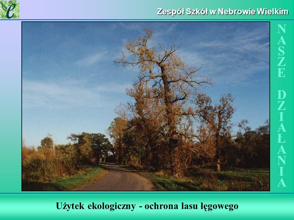 Użytek ekologiczny - ochrona lasu łęgowego