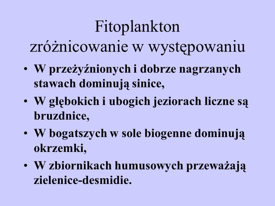 Fitoplankton zróżnicowanie w występowaniu