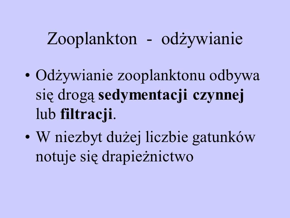 Zooplankton - odżywianie