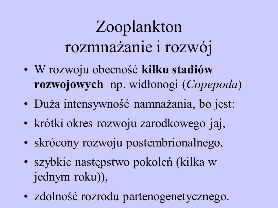 Zooplankton rozmnażanie i rozwój