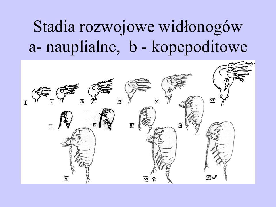Stadia rozwojowe widłonogów a- nauplialne, b - kopepoditowe