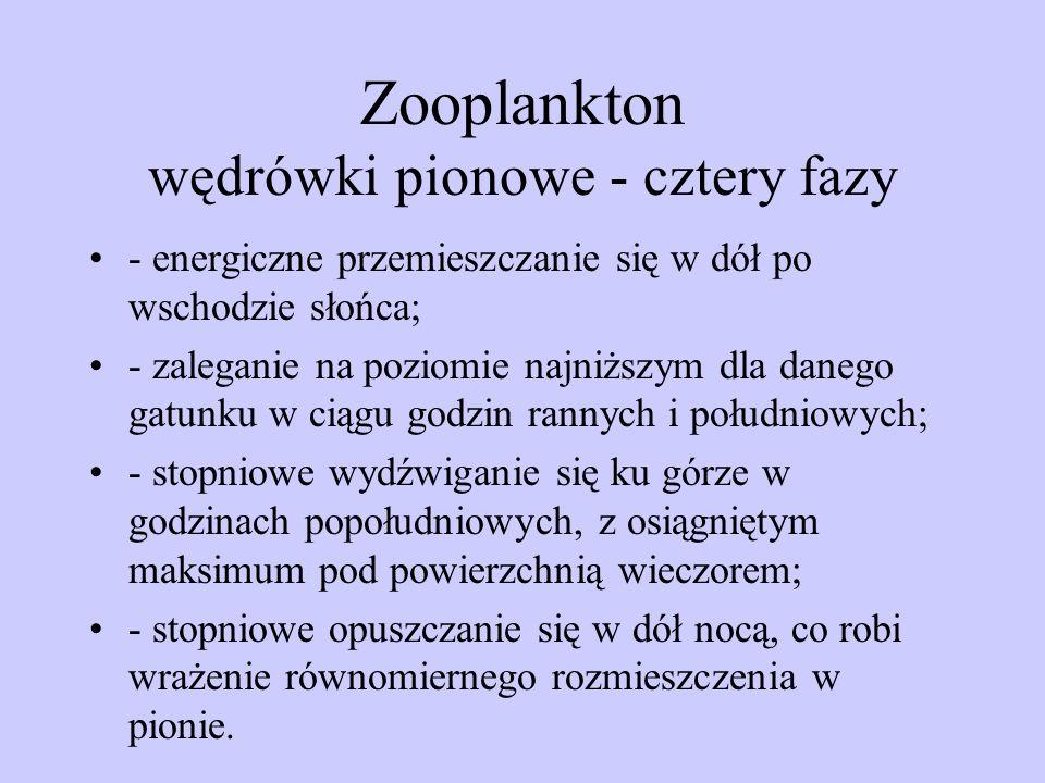Zooplankton wędrówki pionowe - cztery fazy
