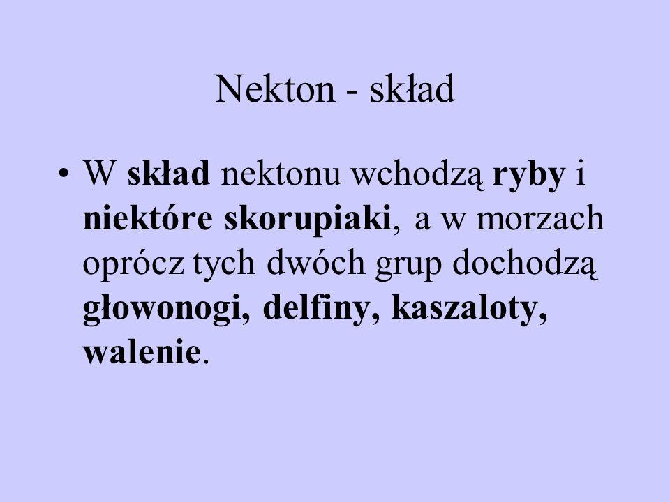 Nekton - skład