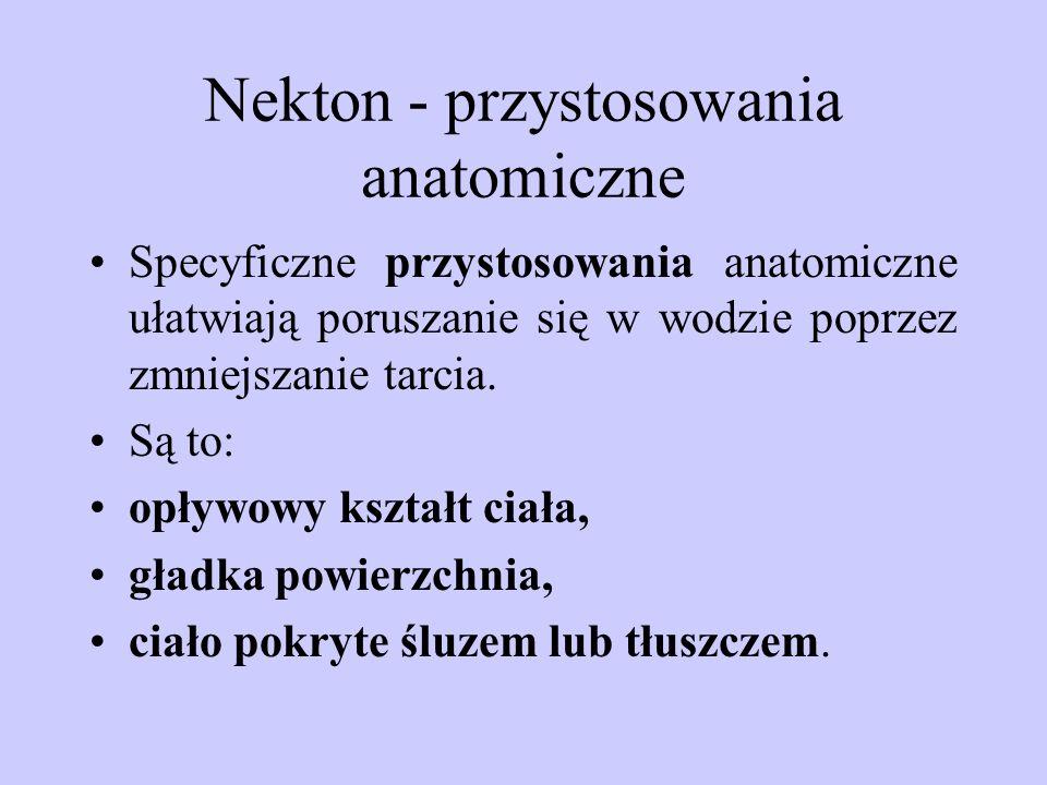 Nekton - przystosowania anatomiczne