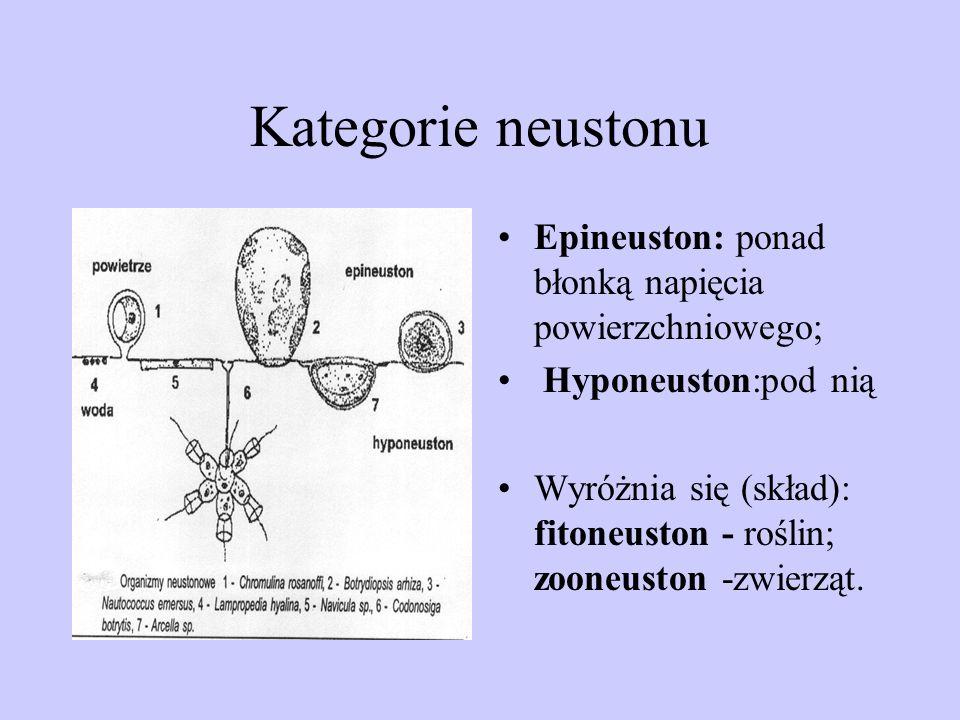 Kategorie neustonu Epineuston: ponad błonką napięcia powierzchniowego;