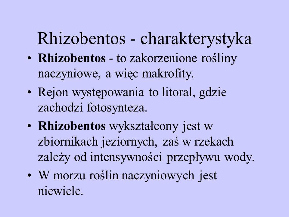 Rhizobentos - charakterystyka
