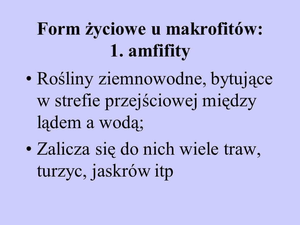 Form życiowe u makrofitów: 1. amfifity