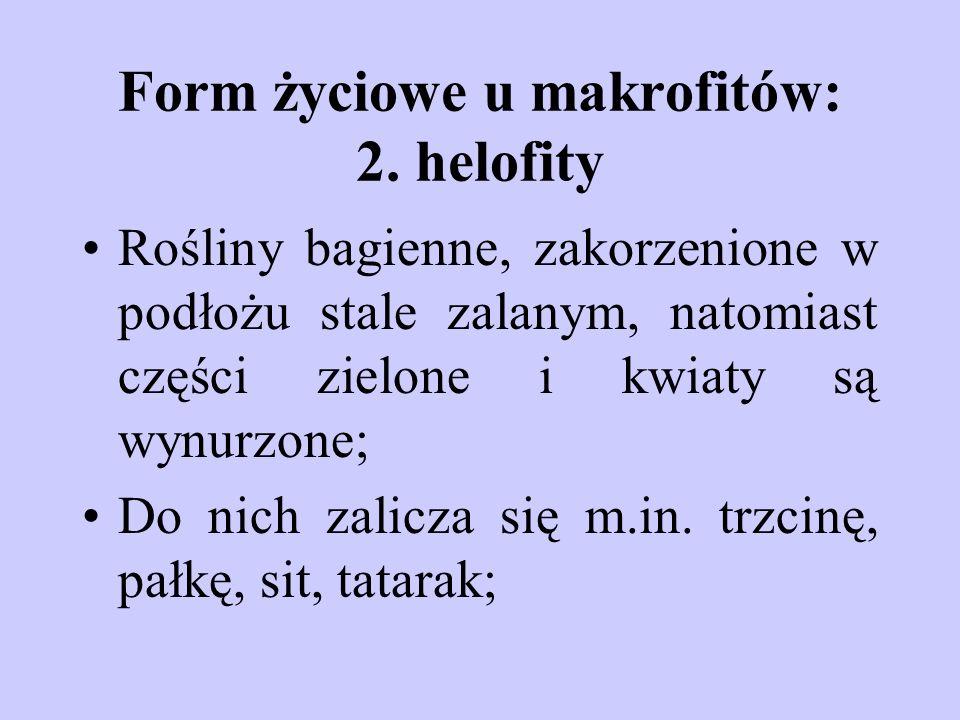 Form życiowe u makrofitów: 2. helofity