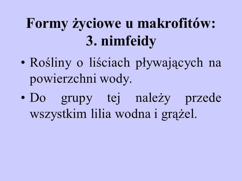 Formy życiowe u makrofitów: 3. nimfeidy