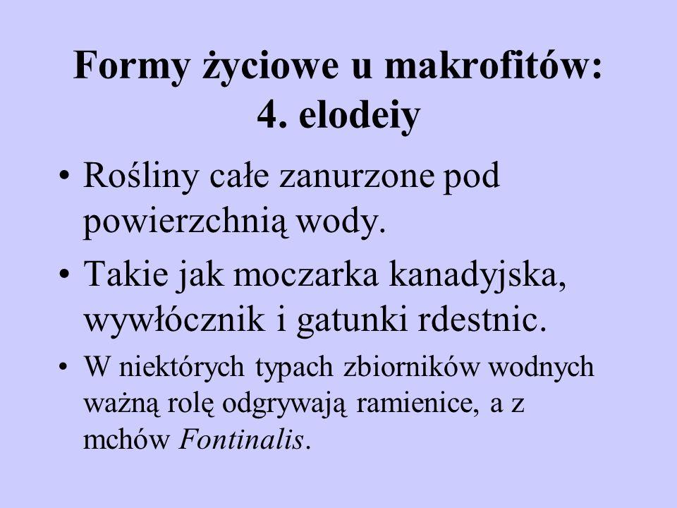 Formy życiowe u makrofitów: 4. elodeiy