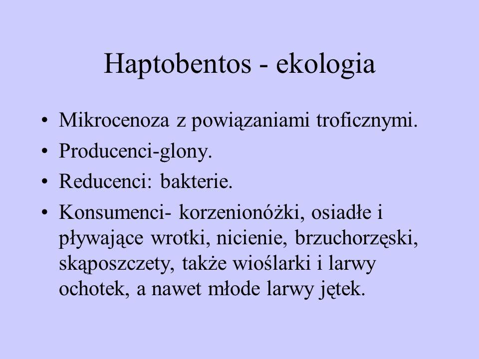 Haptobentos - ekologia