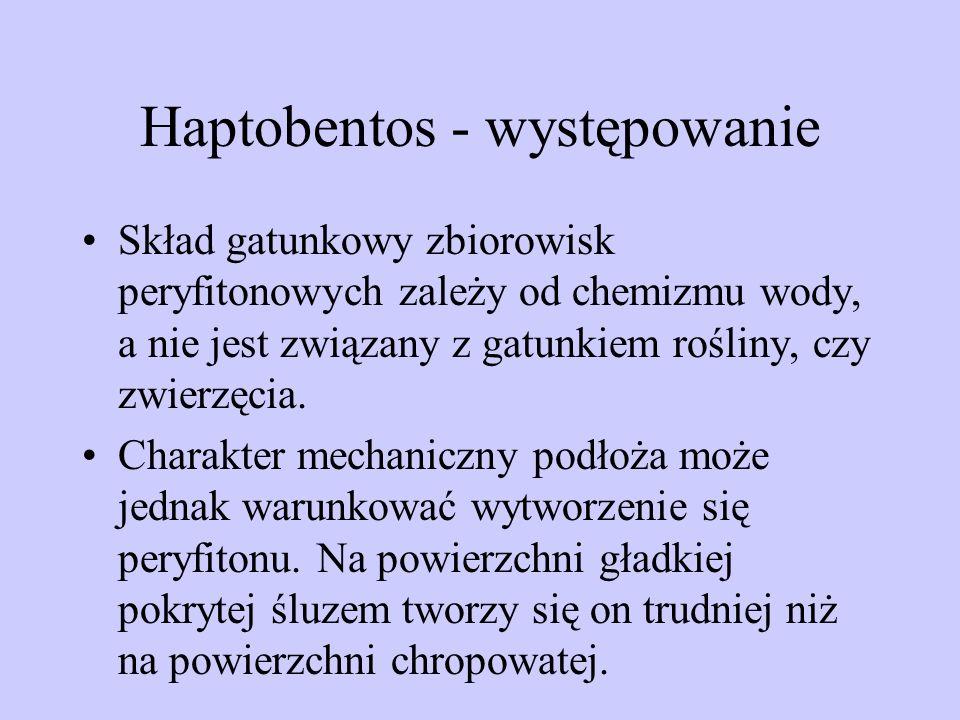 Haptobentos - występowanie