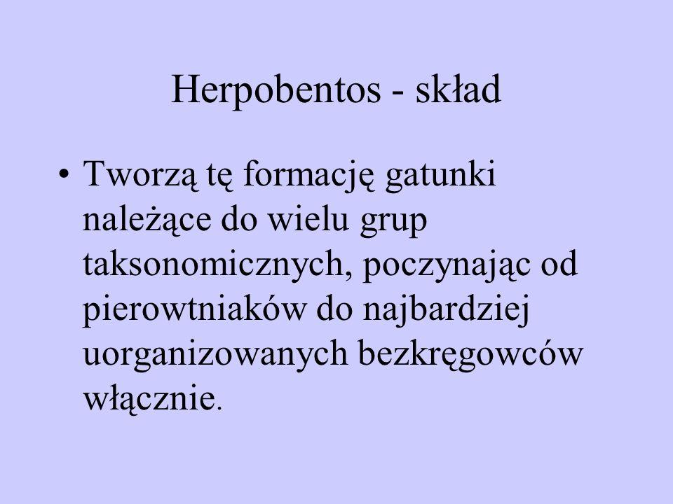 Herpobentos - skład