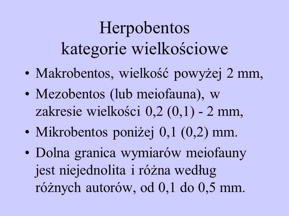 Herpobentos kategorie wielkościowe
