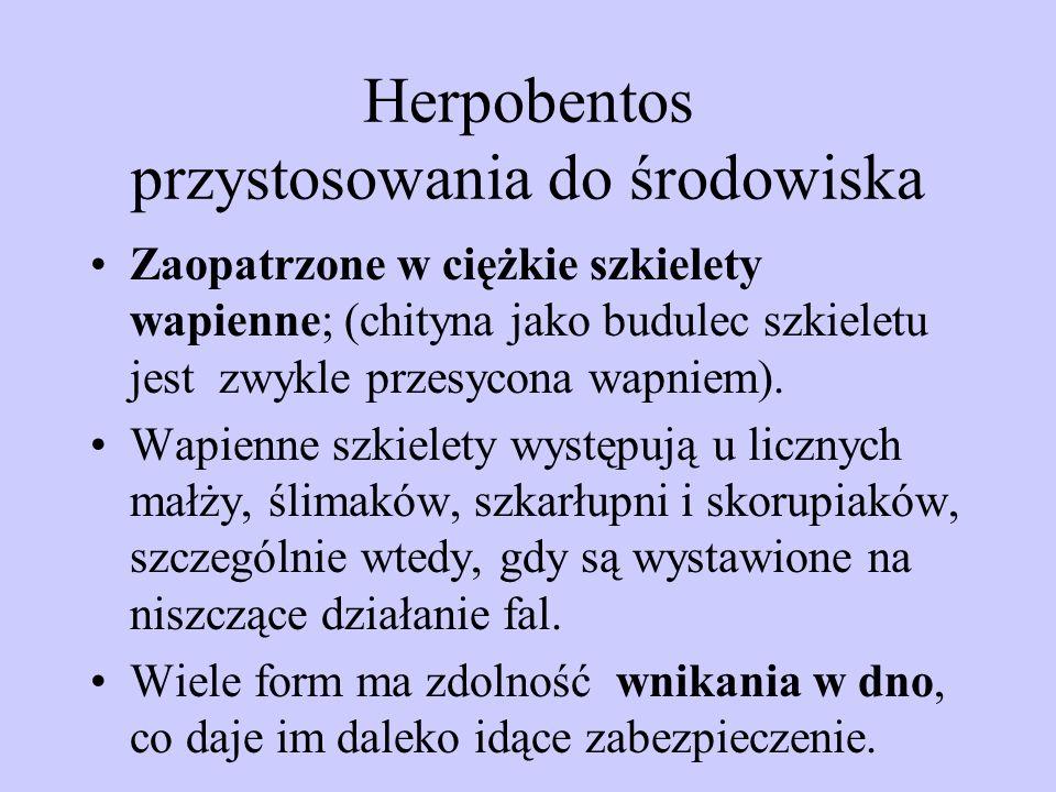 Herpobentos przystosowania do środowiska