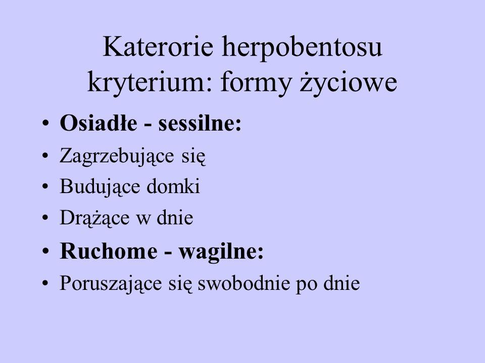Katerorie herpobentosu kryterium: formy życiowe