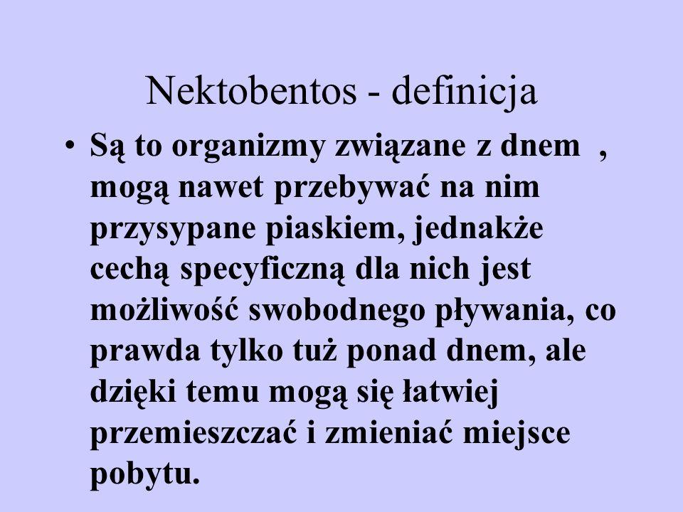 Nektobentos - definicja