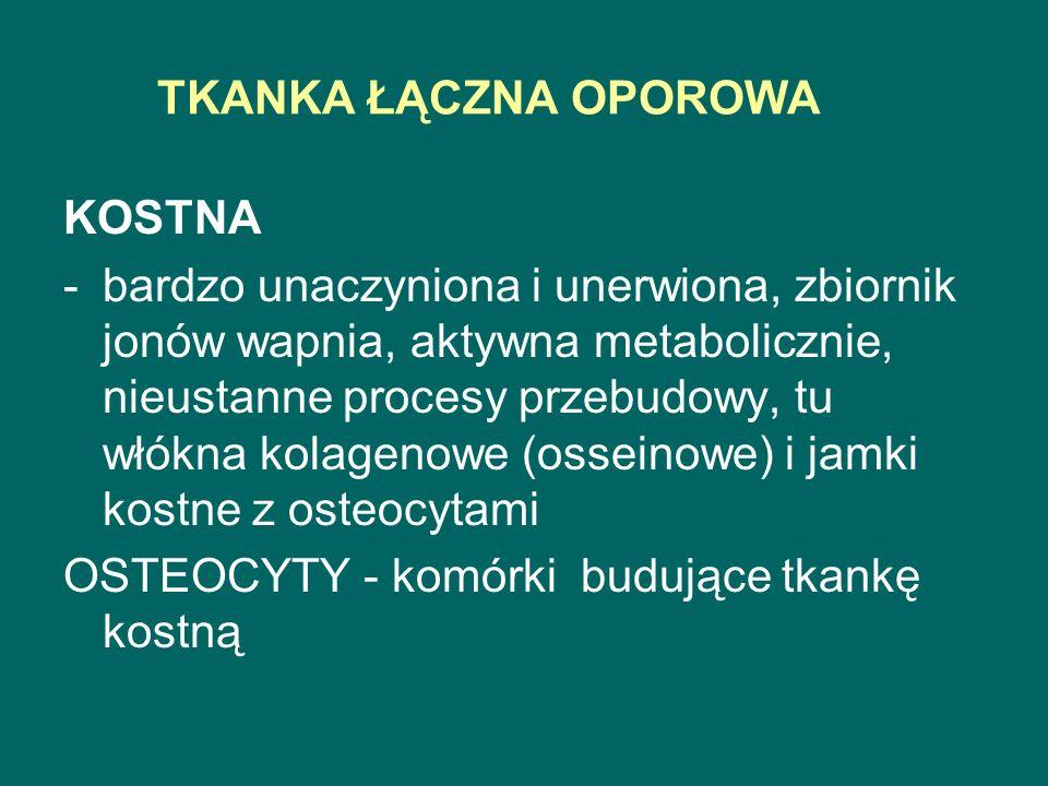 TKANKA ŁĄCZNA OPOROWA KOSTNA.
