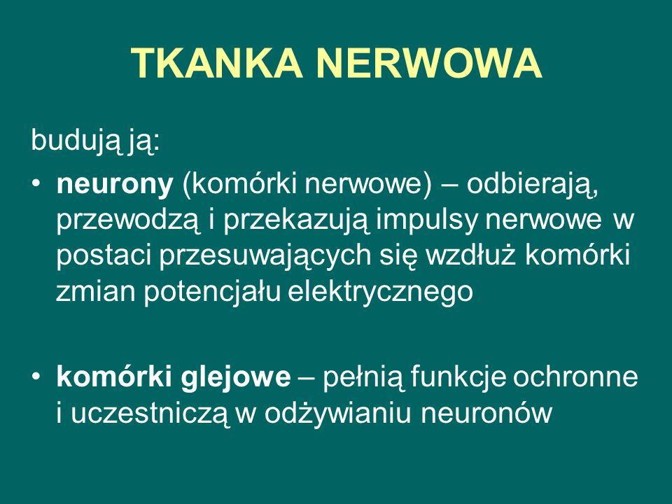 TKANKA NERWOWA budują ją:
