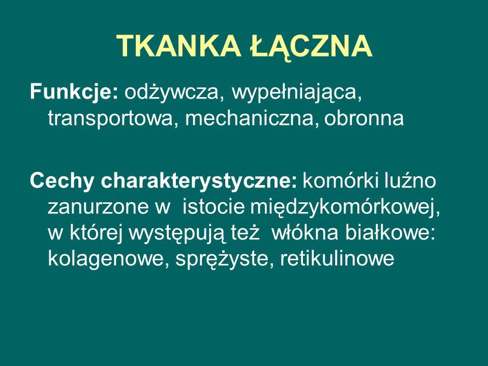 TKANKA ŁĄCZNA Funkcje: odżywcza, wypełniająca, transportowa, mechaniczna, obronna.