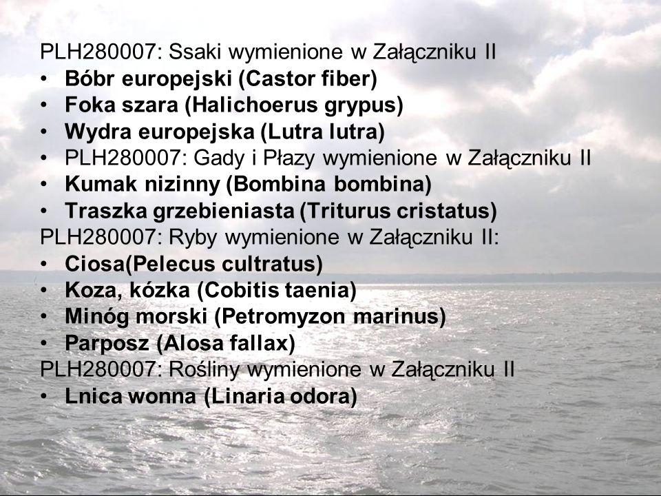 PLH280007: Ssaki wymienione w Załączniku II
