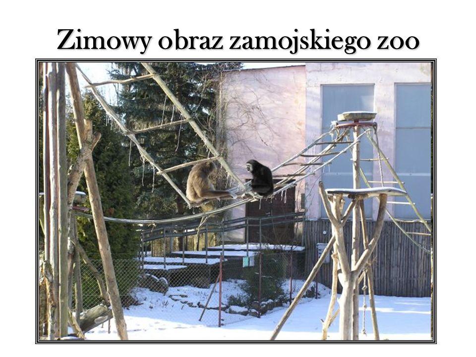 Zimowy obraz zamojskiego zoo