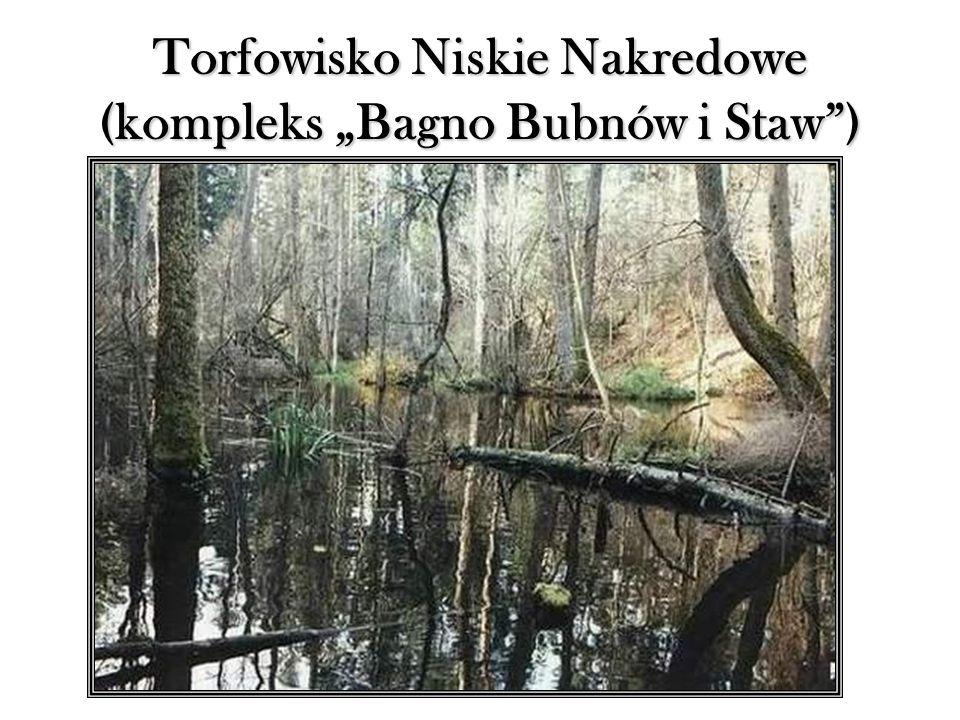 """Torfowisko Niskie Nakredowe (kompleks """"Bagno Bubnów i Staw )"""
