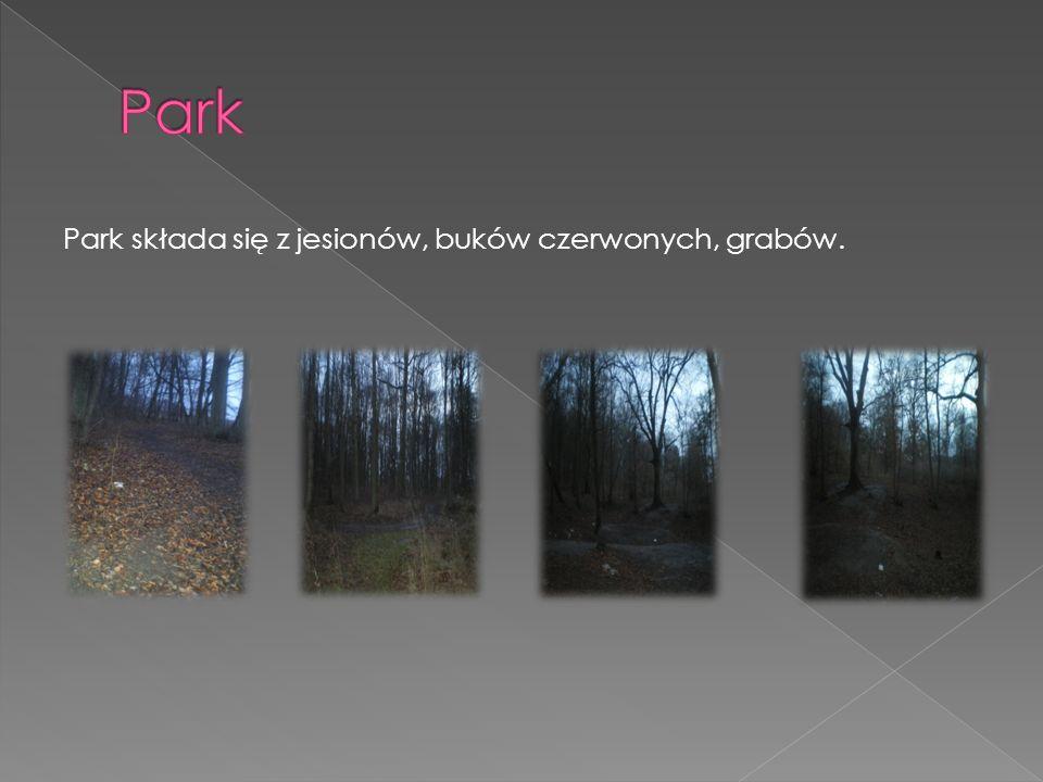 Park Park składa się z jesionów, buków czerwonych, grabów.