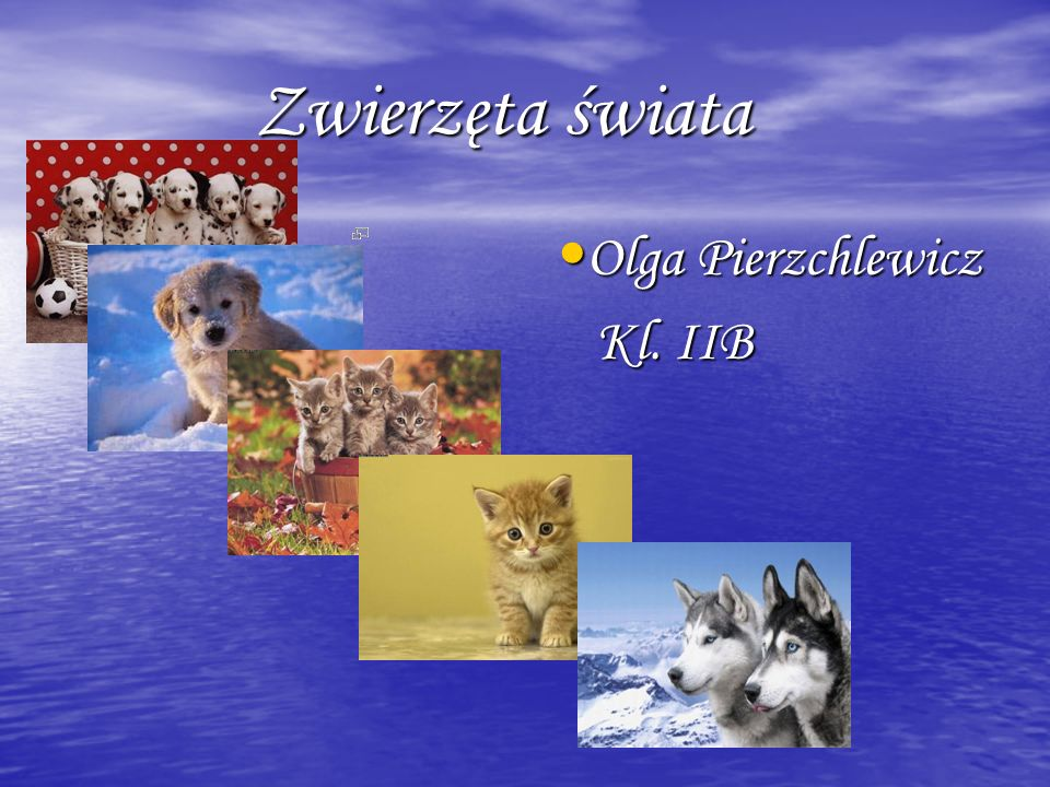 Zwierzęta świata Olga Pierzchlewicz Kl. IIB