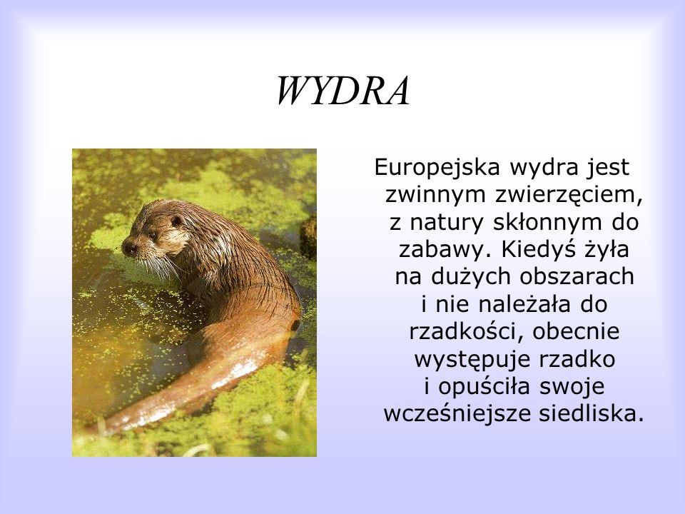 WYDRA