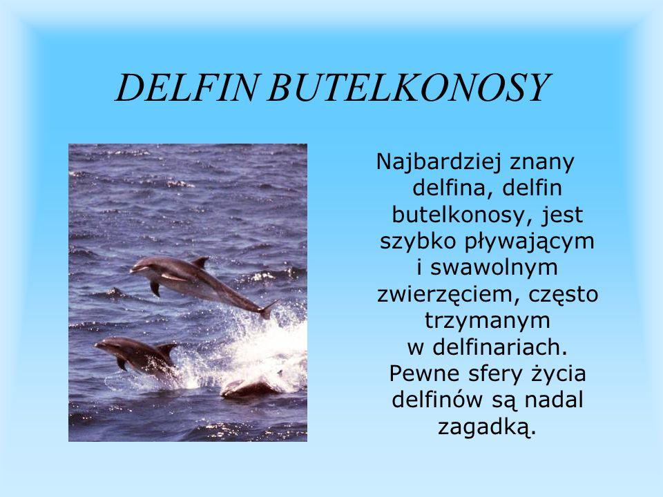 DELFIN BUTELKONOSY