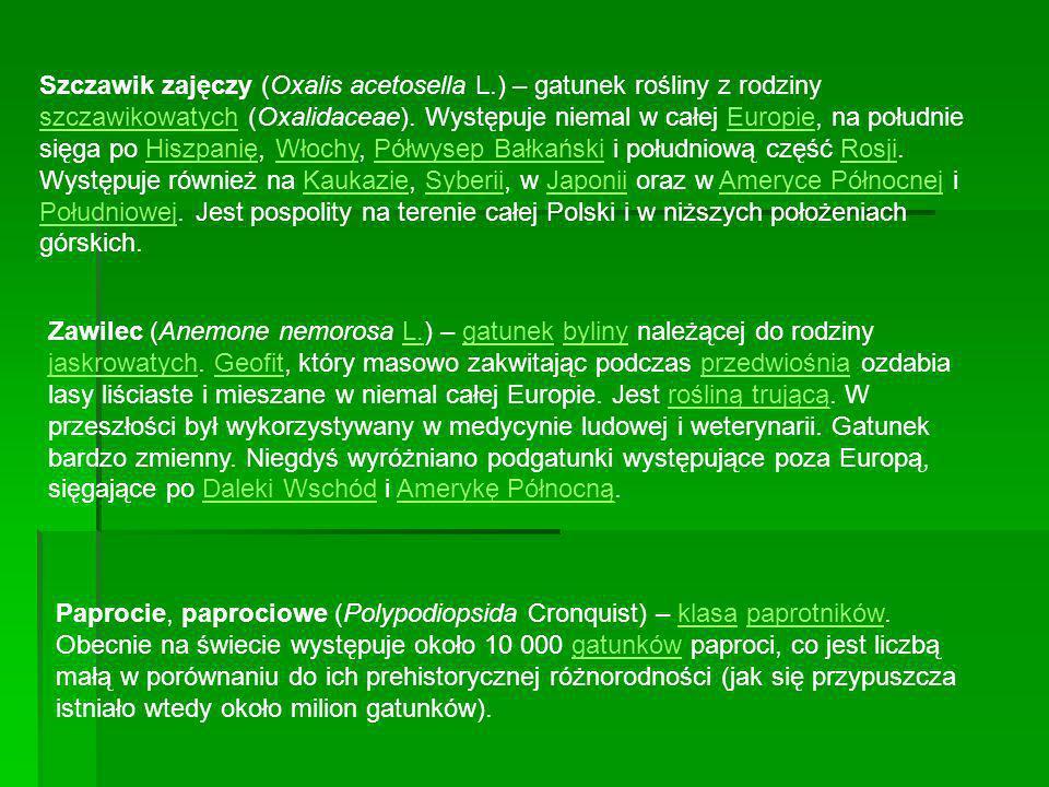 Szczawik zajęczy (Oxalis acetosella L