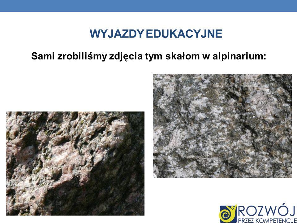 Sami zrobiliśmy zdjęcia tym skałom w alpinarium: