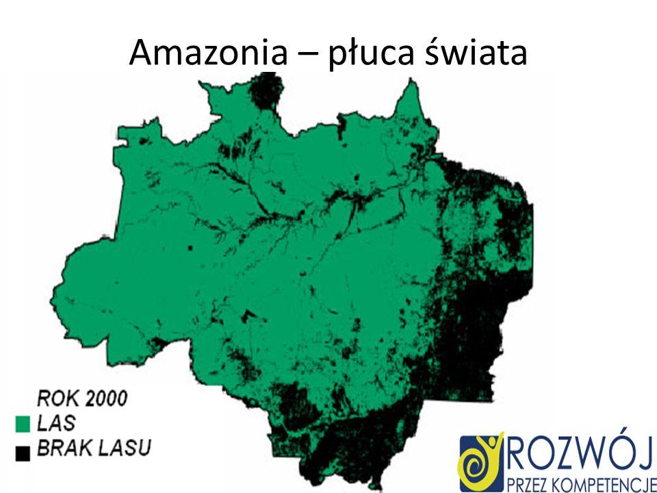 Amazonia – płuca świata