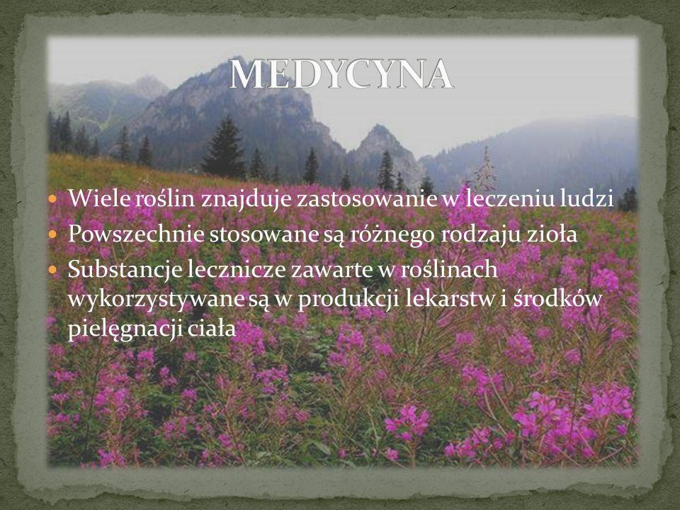 MEDYCYNA Wiele roślin znajduje zastosowanie w leczeniu ludzi