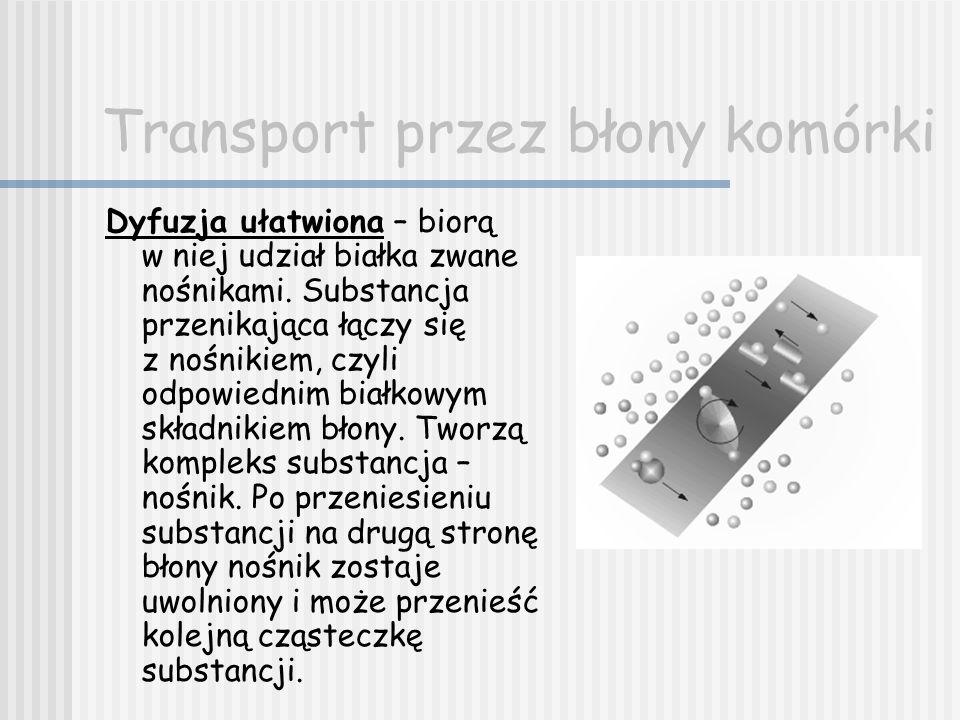 Transport przez błony komórki