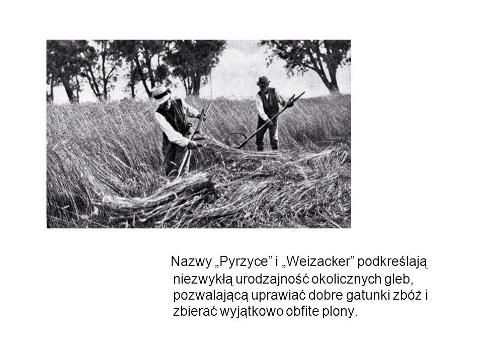 """Nazwy """"Pyrzyce i """"Weizacker podkreślają niezwykłą urodzajność okolicznych gleb, pozwalającą uprawiać dobre gatunki zbóż i zbierać wyjątkowo obfite plony."""
