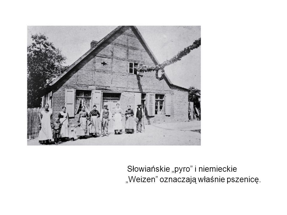 """Słowiańskie """"pyro i niemieckie """"Weizen oznaczają właśnie pszenicę."""