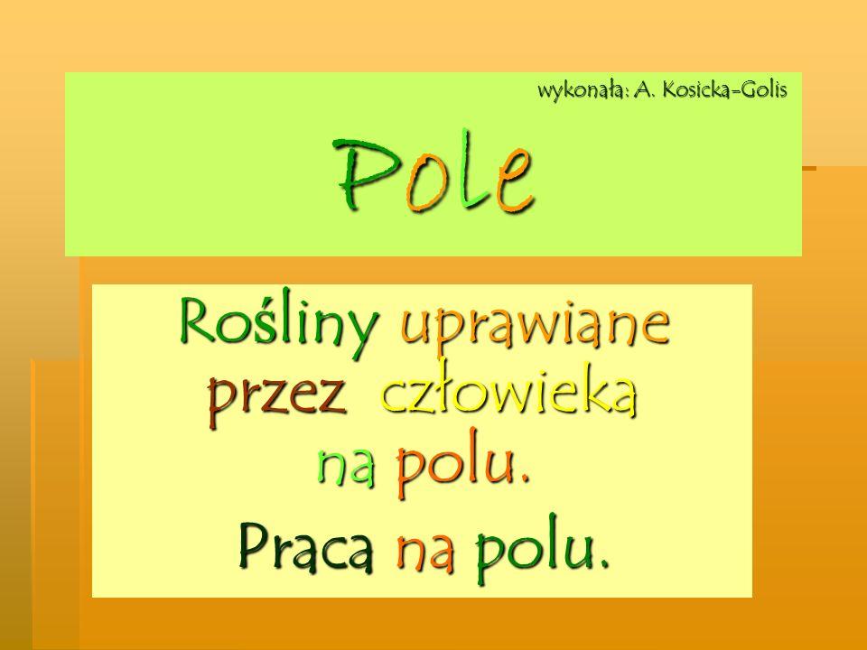 wykonała: A. Kosicka-Golis Pole