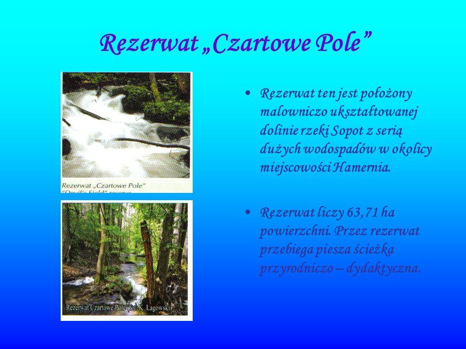"""Rezerwat """"Czartowe Pole"""