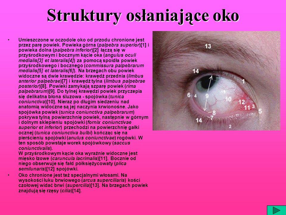 Struktury osłaniające oko