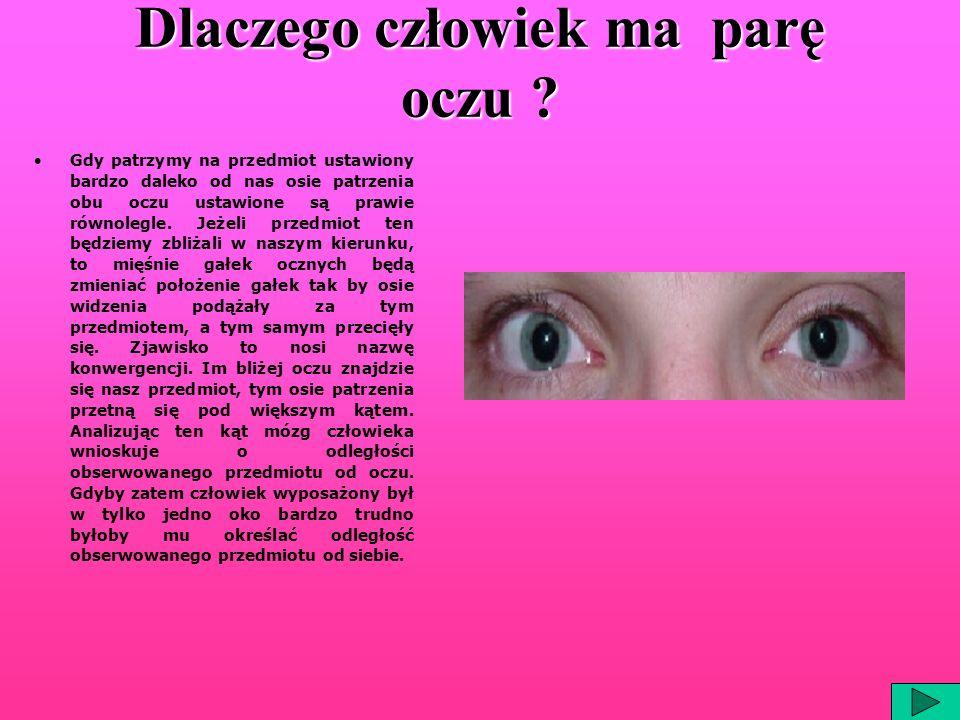 Dlaczego człowiek ma parę oczu