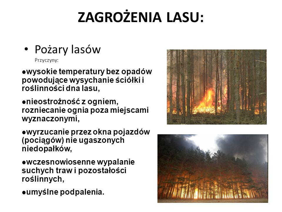 ZAGROŻENIA LASU: Pożary lasów Przyczyny: