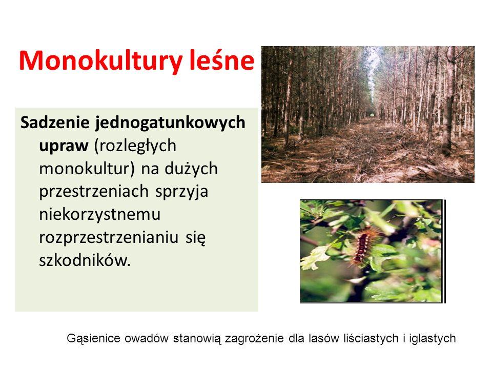 Monokultury leśne