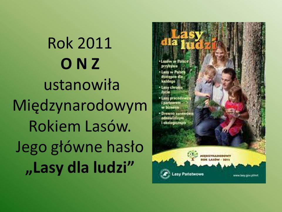 Rok 2011 O N Z ustanowiła Międzynarodowym Rokiem Lasów
