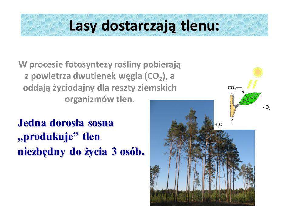 Lasy dostarczają tlenu: