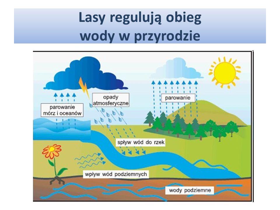 Lasy regulują obieg wody w przyrodzie