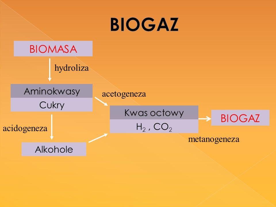 BIOGAZ BIOMASA BIOGAZ Aminokwasy Cukry Kwas octowy H2 , CO2 hydroliza